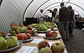 Apple Day, Hanbury Hall - geograph.org.uk - 1509945.jpg