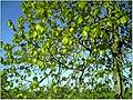 April Parc Natural Freiburg Germany - Master Landscape Rhine Valley Photography 2014 Landgut Mundenhof - panoramio (53).jpg