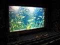 Aquariumvitrine16.jpg