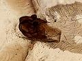 Araneae (YPM IZ 093491).jpeg