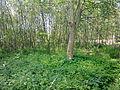 Arbres et arbustes non-identifiés à Grez-Doiceau 004.jpg