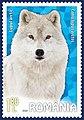 Arctic-Wolf-Canis-lupus-arctos.jpg