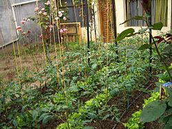 Vegetable Garden Ideas New England urban agriculture - wikipedia