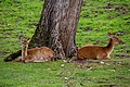 At Chester Zoo 2019 052.jpg