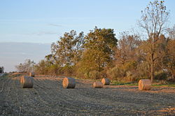 Corn bales along State Route 39