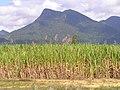 Australia 2004 - panoramio (5).jpg