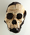 Australopithecus sediba juvenile male skull - Smithsonian Museum of Natural History - 2012-05-17.jpg