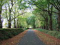 Autumn Avenue at Mount Stuart (269963958).jpg