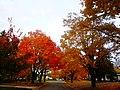 Autumn Colors in Madison - panoramio (9).jpg