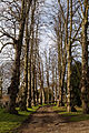 Avenue at Felsted Essex England 02.jpg