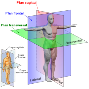 Idr 230 T Anatomi D 16 12 14 Idr 230 T Teori Og Tr 230 Ning S 7 30
