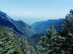 Ayubia National Park - A view of Ayubia's pine forests