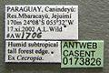 Azteca alfari casent0173826 label 1.jpg