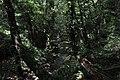 BOSQUE EN CASCADAS DE ONETA - panoramio.jpg