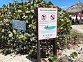 Baby beach sign, Aruba Jul 02, 2021 01-52-39 PM.jpeg