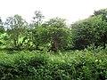 Ballygowan Townland - geograph.org.uk - 1386121.jpg