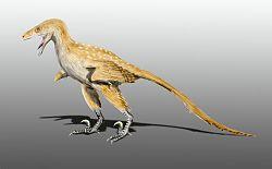 Bambiraptor NT.jpg