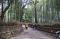 Bamboo grove - panoramio (1).jpg