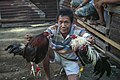 Barangay-Bulacao Cebu-City Philippines Cockfighting-event-10.jpg