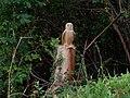 Barn Owl - geograph.org.uk - 244315.jpg