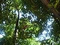 Barreirinhas - MA, Brasil - panoramio (49).jpg