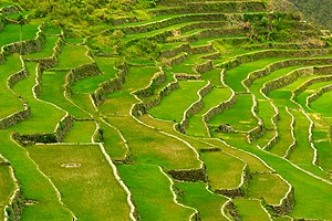 Rice Terraces of the Philippine Cordilleras - Batad Rice Terraces close-up view