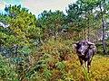 Bauko Peaks in Benguet - 11.jpg