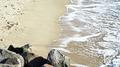 Beach (38929435844).png