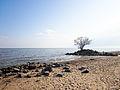 Beach of Khanka Lake.jpg
