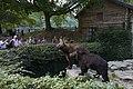 Bears in Domaine des grottes de Han.jpg