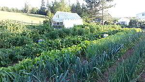 Beaver Brook, Nova Scotia - A well organized garden in Beaver Brook.