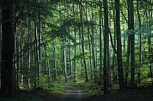 Western European broadleaf forests - Typical beech forest