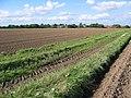 Beeford Footpath - geograph.org.uk - 252324.jpg