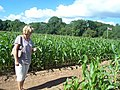Bickleigh , Getting Lost in the Maize Maze - geograph.org.uk - 1224850.jpg