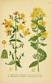 Billeder af nordens flora (Plate 230) (6028847191).jpg