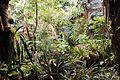 Biome tropical BM05.jpg