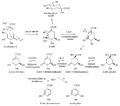 Biosíntesis del ácido shikímico y otros precursores.png