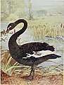 Birds and nature (1898) (20357844836).jpg