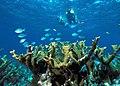 Biscayne NP snorkeling.jpg