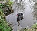 Black Swan, Rocester - geograph.org.uk - 1928507.jpg