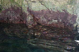 Blue Grotto (Malta) - Cyanobacteria (blue-green algae) in the grotto