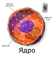 Blausen 0212 CellNucleus ru.png