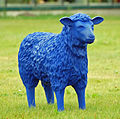 Blue Sheep 01.jpg