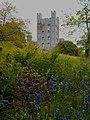 Bluebells near Penrhyn castle (18370394652).jpg