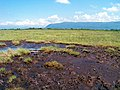 Bog near Western Brook Pond, Gros Morne (2767888840).jpg