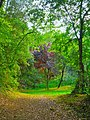 Bosc al Pla de l'Estany - panoramio.jpg