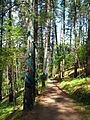 Bosque de Oma (28).JPG