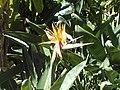 Botanical Garden, Puerto de la Cruz 01.jpg