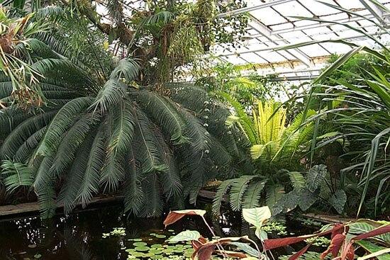 Botanická ZáhradaKošice