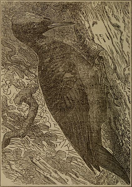 File:Boys and birds; or, Miss Truat's mission (1874) (14563056619).jpg